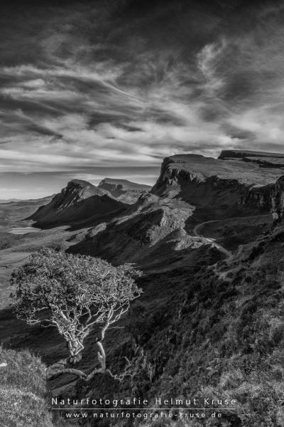 THE Tree in Quiraing
