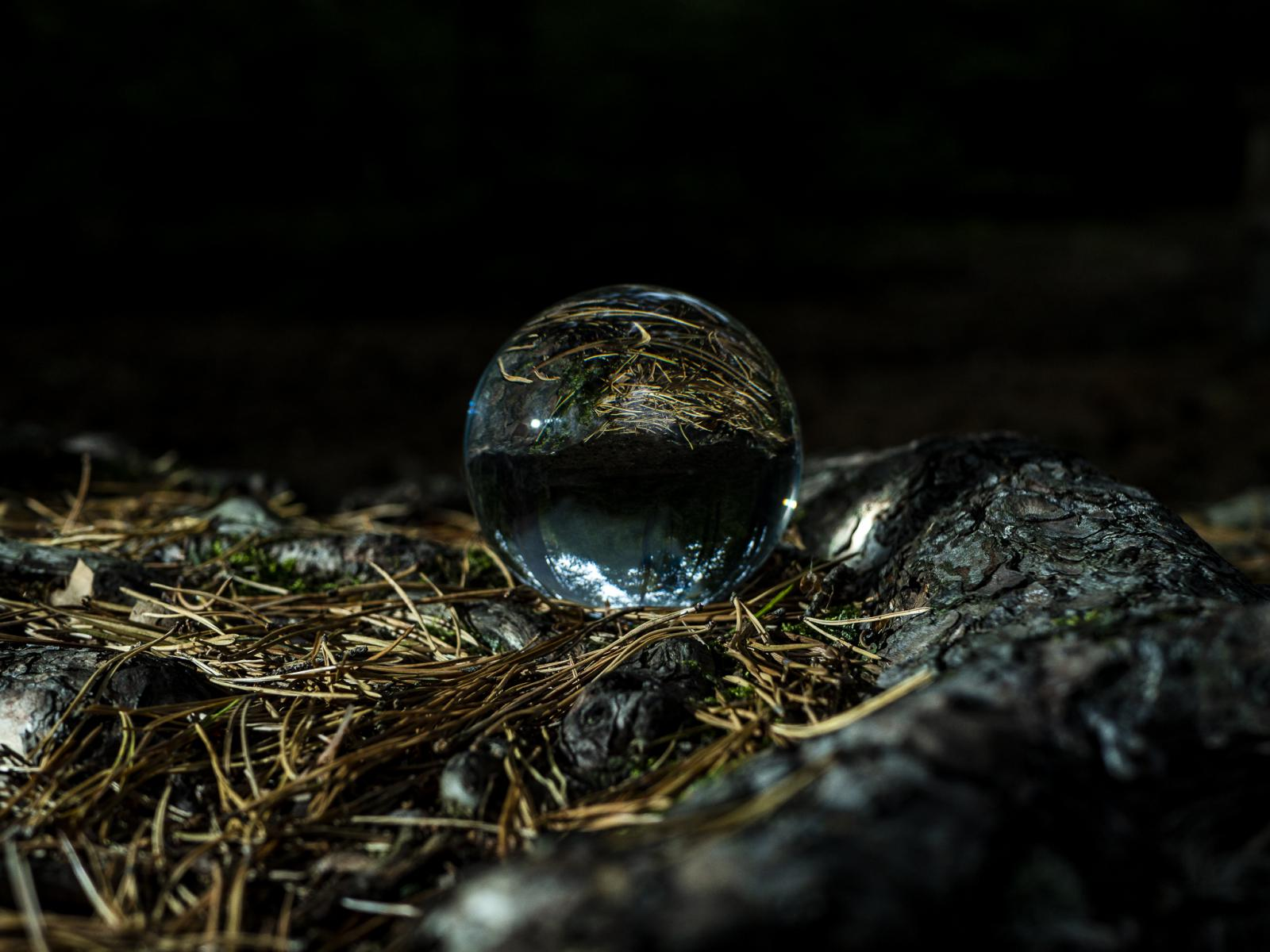 Lensball in the Wood