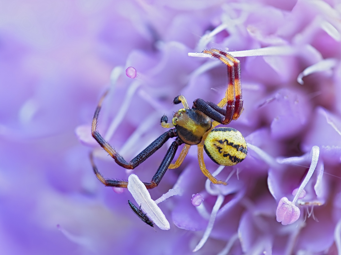 Spinne mit Beifang