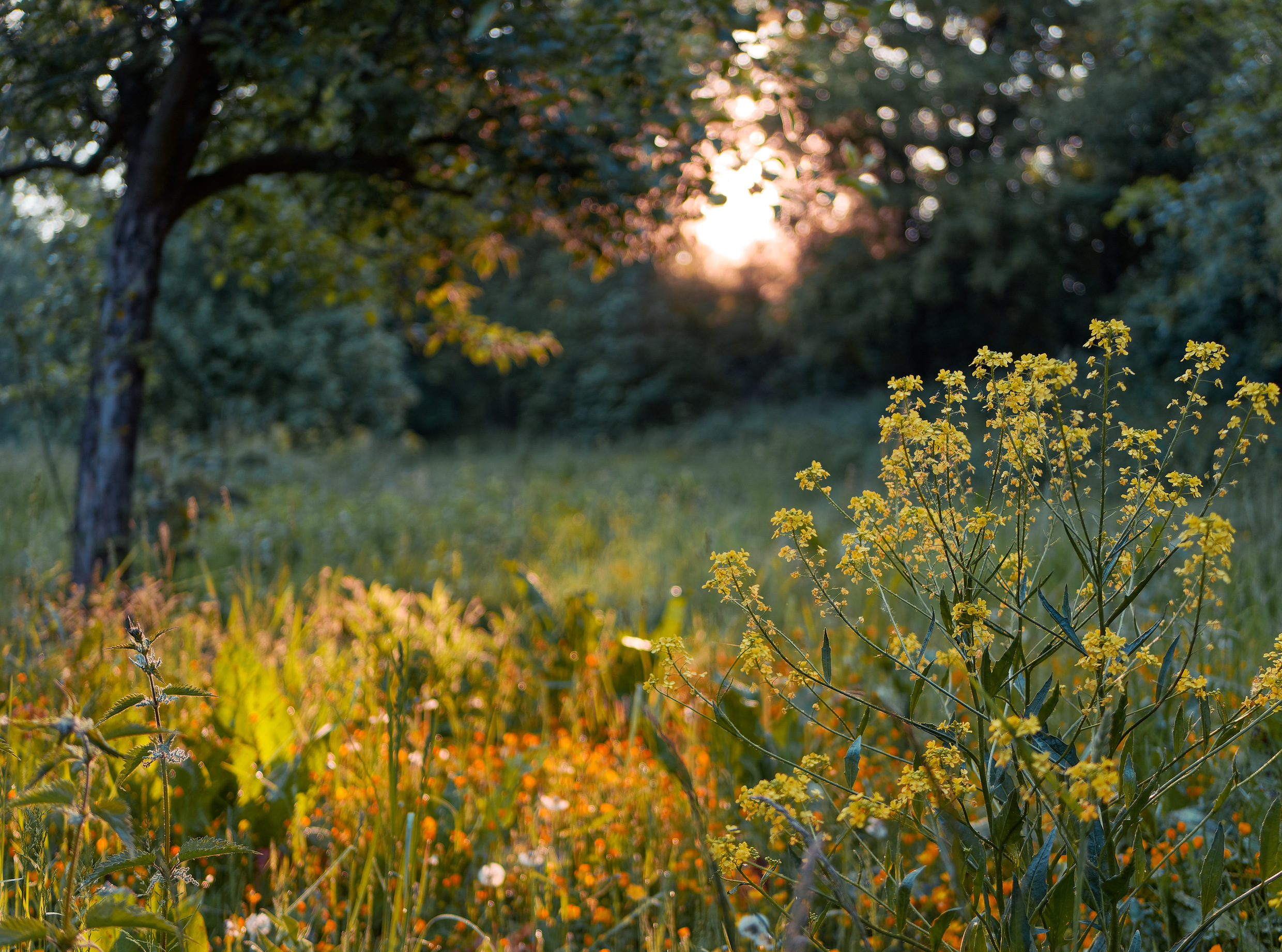 a_morning_in_spring_naturescape